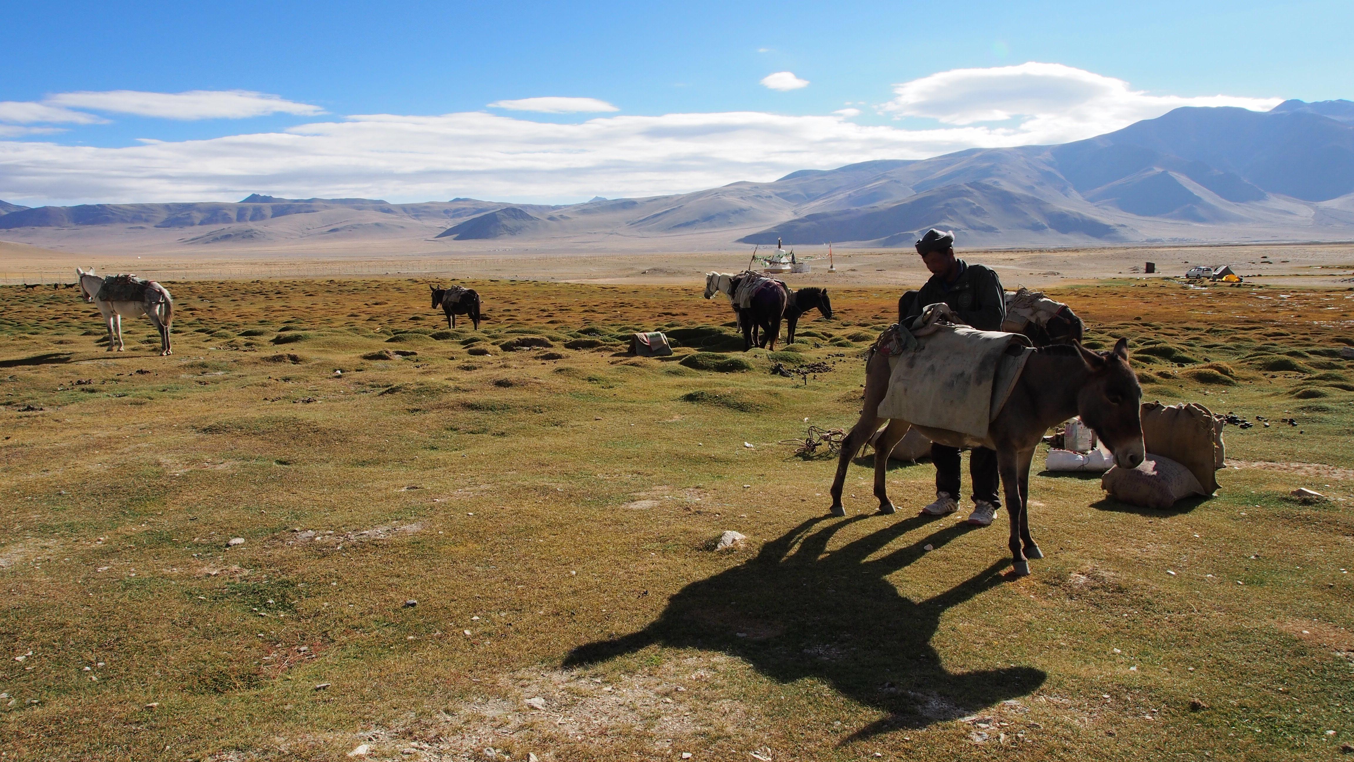 Sanju, horseman